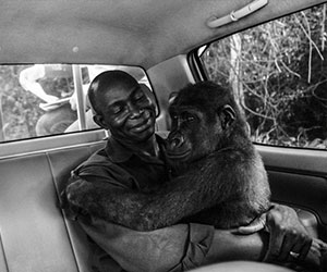 Man hugging a baby gorilla - Endangered Species International