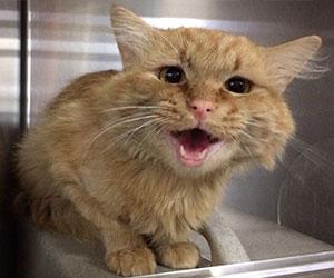 Rescued kitten - Opkit Kitty Sponsorship Program