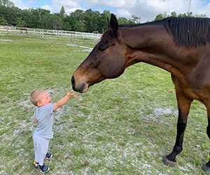 Toddler reaching out to hold a rescued horse - Equestrian