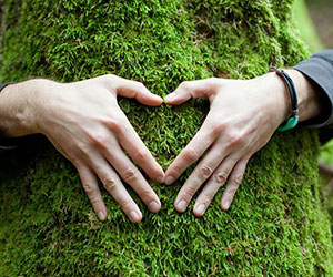 Hands around a tree making a heart shape with fingers - Grist Magazine