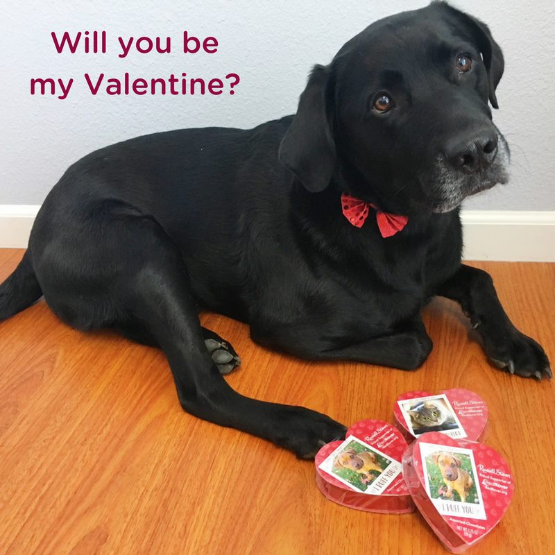 Red Rover - Cute Animal Valentine