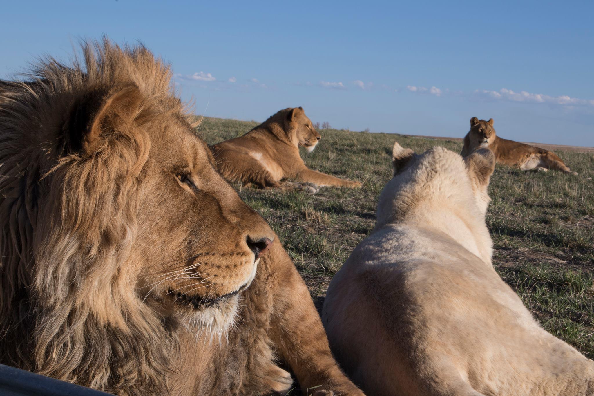 wild-animal-sanctuary