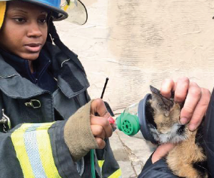 volunteer putting facemask on cat after fire