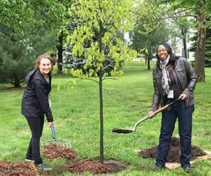 volunteers tree planting California ReLeaf