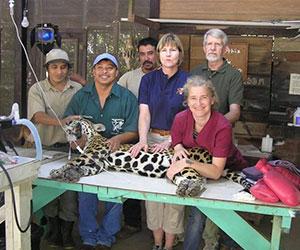 Team of volunteers saving wildlife Project V.E.T.S.