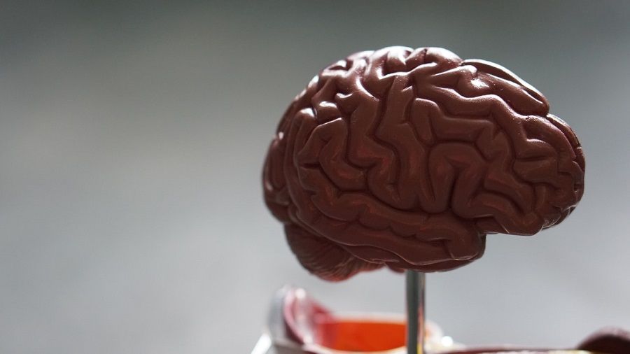These Nonprofits Are Paving the Way for Brain Disorder Research